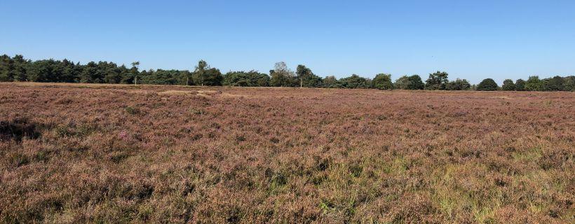 The heath around Hooghalen